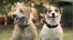 Familia.com.br | #Amizade verdadeira: O #carinho dos #animais (VÍDEO). #amor #animais