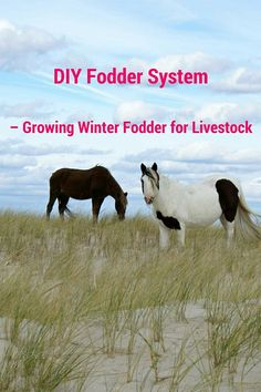 DIY #Fodder System – Growing Winter Fodder for #Livestock