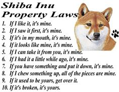 Shiba Inu Property Laws.  They own all!