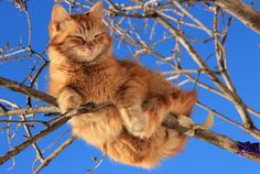 """""""If your cat falls out of a tree, go inside to laugh."""" --Patricia Hitchcock"""
