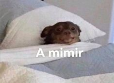 Ont que fofin Funny Spanish Memes, Stupid Funny Memes, Haha Funny, English Memes, Memes Humor, Animal Memes, Funny Animals, Funny Images, Funny Pictures