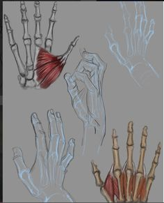 hand bone and muscle drawing reference