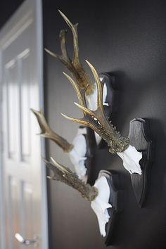 antlers in hallway