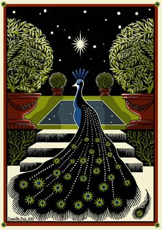 Starry Peacock, Cressida Bell