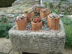 think 'big' too, envisaging a bigger version of this arrangement. Instead of a trough, imagine a large gravel bed as the base and on it are arrangement of several reclaimed chimney pots, on different levels and sizes, teeming with sempervivums, agaves, aloes,....
