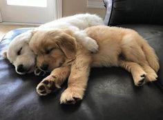 Cuddle Buddies http://ift.tt/2rwVNai