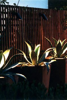 garden lighting elegance