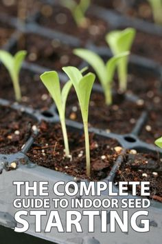 Starting Garden Seeds Indoors, Starting Flowers From Seeds, Starting Vegetable Seeds, Seed Starting, Plant Seeds Indoors, Seeds To Start Indoors, Planting Seeds Outdoors, Indoor Vegetable Gardening, Vegetable Garden Tips