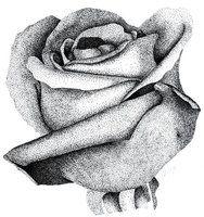 Stippled Rose by MoonlightRomance16