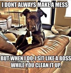 I don't always make a mess, but when I do, I sit like a boss while you clean it up......   Reminds me of Raven!
