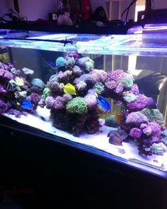 Sandbed and glass cleaned makes the tank look so much deeper and brighter. Now I…