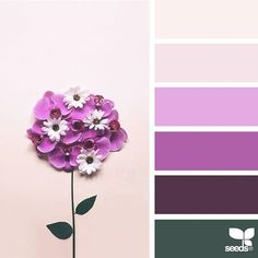 today's inspiration image for { color flora } is by @in_somnia_ ... thank you, Judith, for another gorgeous #SeedsColor image share!
