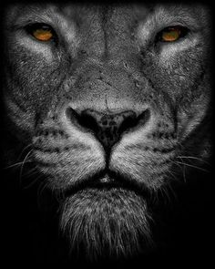 Framed Print - Black & White Lion's Face (Picture Poster Animal Tiger Cat Art) Lion Pictures, Face Pictures, Black And White Lion, Lion Wallpaper, Like A Lion, Lion Of Judah, Lion Art, Lion Tattoo, Big Cats