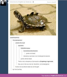 Good thing they're not endangered, or we would've had to save rock & roll all over again>> ded lol