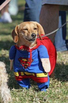 Super dog to the rescue!