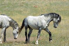 Cavalos Selvagens, Selvagem, Andar