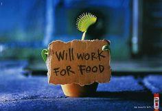 Homeless Plant...