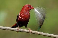 aves en la india - Buscar con Google