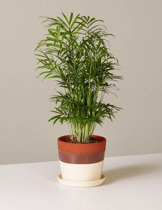 5f7b6d45513 34 Best House Plants images