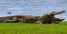 #Udawalawe #National_Park, Sri lanka