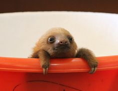 Awww! Les 39 bébés animaux les plus craquants du monde animal qui vous feront fondre de tendresse