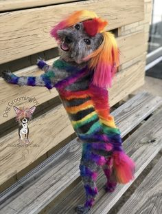 Creative Grooming, Rainbow Fairies, Dog Haircuts, Cute Cats And Kittens, Dog Grooming, Black Girl Magic, Dog Love, Cute Animals, Fairy
