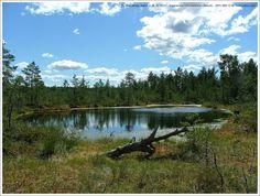 Amazing Estonian Nature - Viru Raba, Lääne-Virumaa, Estonia (EU)