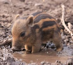 """When I was a young warthog"""