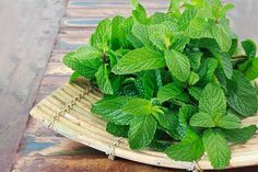Mint Plants, Cool Plants, Hydroponic Gardening, Hydroponics, Gardening Tips, Homemade Toner, Drying Mint Leaves, Salsa Pesto, Growing Mint