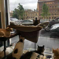 21.06 cat's cafe Soulmate