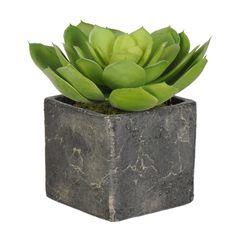 House of Silk Flowers Inc. Artificial Echeveria Succulent Desk Top Plant in Pot
