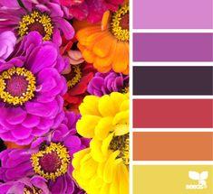 Zinnia hues (4-6)