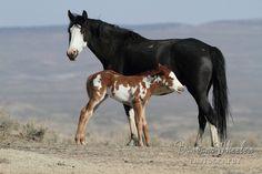 Sand Wash Basin Wild Horses M126411
