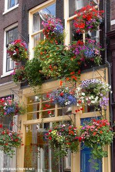 ^Amsterdam `garden`