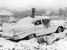 The Red List.  Dogs like Christmas time too.  By Bruce Weber
