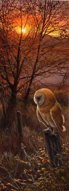 Barn Owl - title 'Winter Sun' - Original Acrylic Wildlife Art by Nature & Wildlife artist Dr. Jeremy Paul - from In a Perfect World...
