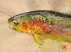 Marble Trout - Art by Jeff 'Trout Bum' - Referenced from Photo by Jason Borger
