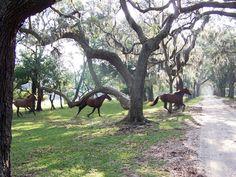 Wild horses at Cumberland Island, GA
