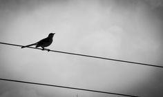 #43 My Photos, Bird, Animals, Animales, Animaux, Birds, Animal, Animais