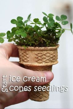 Start seeds in an ice cream cone, then plant it all into the ground.