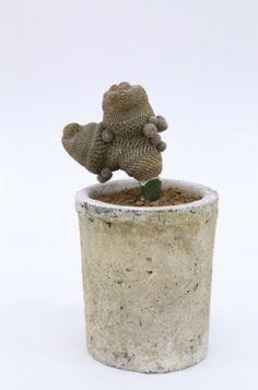 Kohei Oda's cacti collection