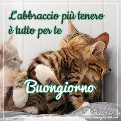 gattini teneri abbracciati immagine nuova Avon Facebook, Italian Memes, Good Morning Good Night, Feelings, Anime, Google, Messages, Sentences, Cats