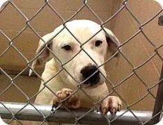 Doylestown, PA - Terrier (Unknown Type, Medium)/Hound (Unknown Type) Mix. Meet Ken, a puppy for adoption. http://www.adoptapet.com/pet/12452380-doylestown-pennsylvania-terrier-unknown-type-medium-mix