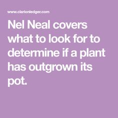 Nel Neal covers what to look for to determine if a plant has outgrown its pot. Ivy Plants, Plant Needs, That Look, Signs, Cover, Shop Signs, Ivy, Sign