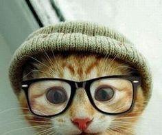 Cute cat... Love the hat!