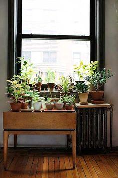 Me encanta esta cosa de abuelas de tener un montón de plantas en un rincón!