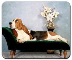These basset hound dog breed mouse pads are sure to delight the most discerning of basset hound dog lovers. Polyester front, neoprene backing, and washable!