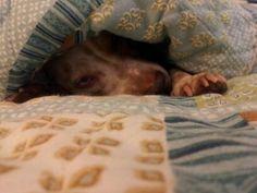 Nap time 4 Licky