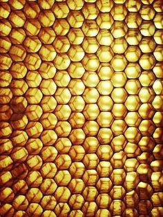 Honey comb up close in the sun.