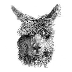 Alpaca Pen and Ink Drawing by Scott Woyak